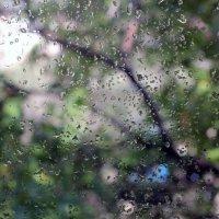 The rainy window :: Валерия Похазникова