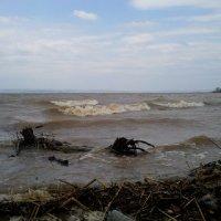 Волга - почти море :: Елена Глазатова
