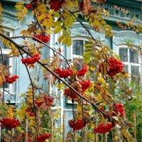 А.под окном,кудрявая рябина..... :: Елизавета Успенская