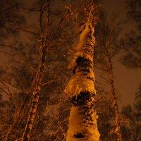 Вот и пришла зима... :: Екатерина Сергиенко