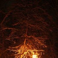 Снежный вечер :: Екатерина Сергиенко