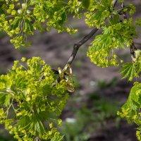 Весна :: Павел Голубев