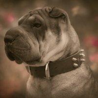 Весеннее собачье настроение :: alisa kuznechik