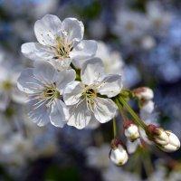 краски весны :: Alice Madman