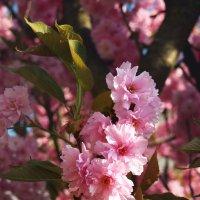весна :: Лара Leila