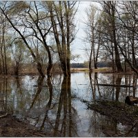 Весенний паводок :: Татьяна Губина
