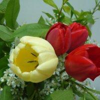 Цветы весны. :: Ирина