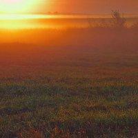 Море солнца... :: Александр Никитинский
