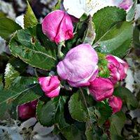 Цветочки на дереве :: Татьяна Королёва