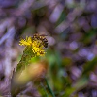 Пчелка :: Den SkyWet