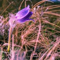 #flower-001 :: Антон Рябов