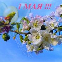 С праздником Мая,Мира,Весны и Труда !!! :: Lara