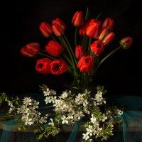 Цветение в начале мая). :: Ирина Чикида