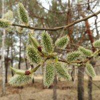 Весна :: Вик Токарев