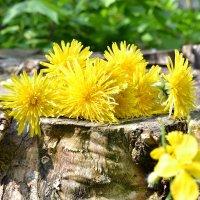 Весна :: Ольга Костенко