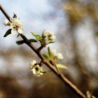 весна :: Olesya Inyushina