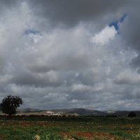 Путешествуя по Кипру. :: Нелли *