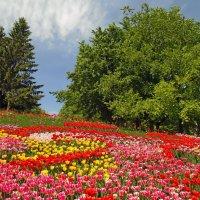 Цветочная поляна :: Ростислав