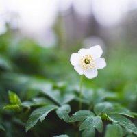 весна :: Татьяна Буланчикова