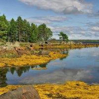 Отлив на Белом море :: Владимир Скоробогатько
