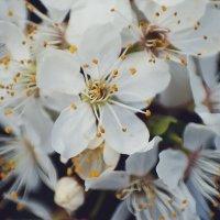 Весна :: Олег Пастухов