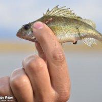 маленькая Рыбка :: Иван Синицарь