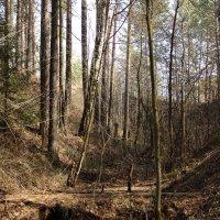В лесу. :: Андрей Дурапов