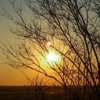 Солнце :: Julia Demchenko