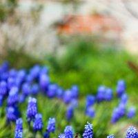 весна :: Лиза Николаева