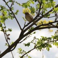 Весенний воробей :: Aнна Зарубина