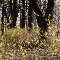 Зеленая дымка. :: Лазарева Оксана