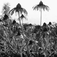 Просто цветы. :: Надежда Ивашкина