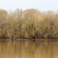 вода пришла :: Дмитрий Учителев