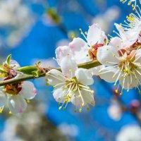 Весна :: Юлия Шторм