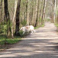 В Алешкинском лесу :: Любовь Бутакова