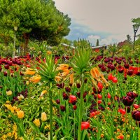 райский сад :: Александр Корчемный