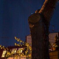 А из нашего окна... :: Sergey Kuznetcov