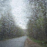 Дождь :: Наталья Петрова