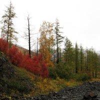 Осень в тундре 1 :: Сергей Карцев