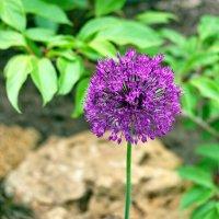 Красивый цветок. :: Александр Стаховский