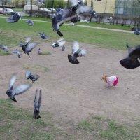 Гоняем голубей :: Лейла ......