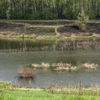 весна на пруду :: Геннадий Свистов
