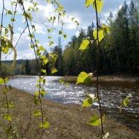 Запах весны :: Сергей Шаврин
