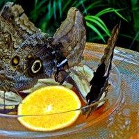 бабочки, банан и апельсин :: Александр Корчемный