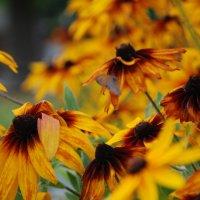 Цветы :: Ирина Морозова