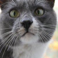 Мой кот.. :: Юлия Кутовая