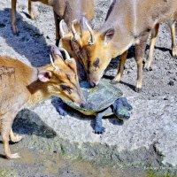 Наши звери не ходят грязными в общественный бассейн! :: Виталий Половинко
