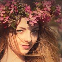 Яблоневый цвет :: Елена Ерошевич