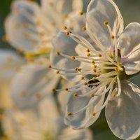 Ещё один цветуёчек :: Владимир Самсонов