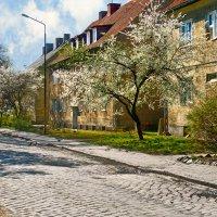весна в старом городе :: Владимир Матва